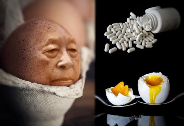 Japończycy wyhodowali kury znoszące jajka, w których są… leki!